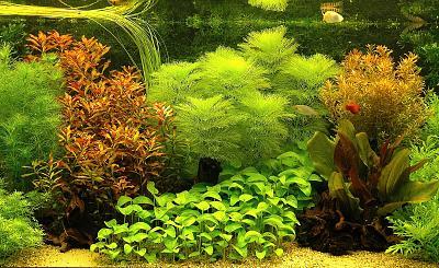 amazing-aquarium-design-decoration-ideas-interior-adorable-aquascaping-design-sweet-.jpg