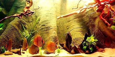 aquarium-wallpapers-24.jpg
