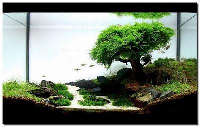 aquascape-aquarium-designs-plants.jpg