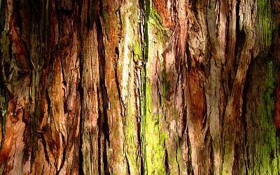mossy_tree_bark-807869.jpg