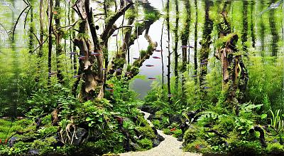 amazing-green-tree-jpg.jpeg