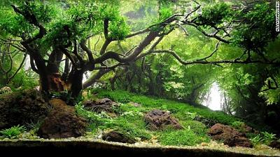 140129114955-aquarium-charm-light-all4aquarium-ru-horizontal-gallery.jpg