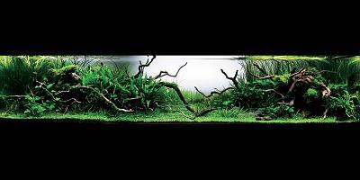 title deepgreen minako hara (japan).jpg