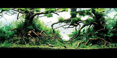title enchanted forest michaelg.w.wong (hongkong).jpg