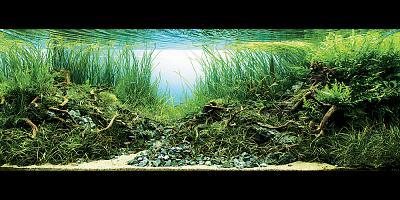 title swampland szymon fiedorowicz(poland).jpg