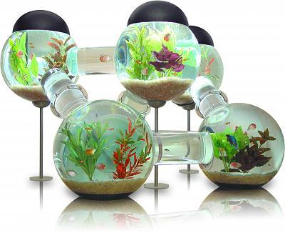 4-labyrinth-aquarium.jpg