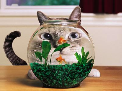 4-fishing-cat-aquarium-fish-distortion-hd-446588.jpg