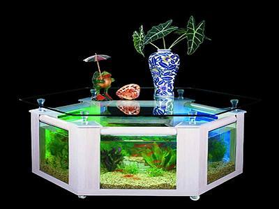 perfect-fish-tanks-pics-your-house-fancy-design.jpg