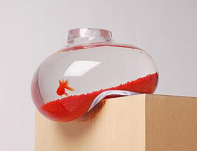 1.-balancing-fishbowl.jpg