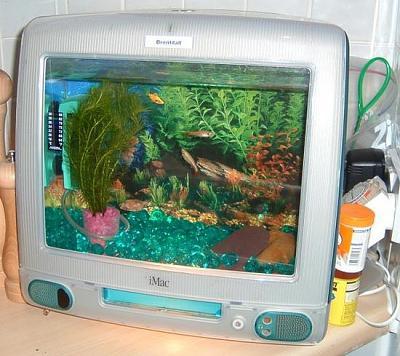 creative_fish_tanks15.jpg