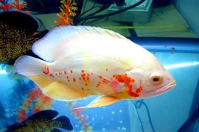 white_fish_large.jpg