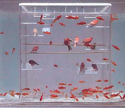 fishbirdtank.jpg
