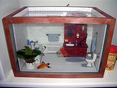 bathroom-fish-tank.jpg