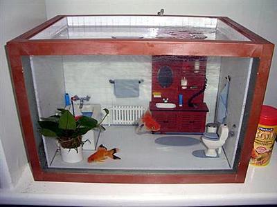 bathroom-fish-tank.jpg
