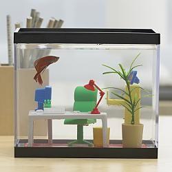 fish23.jpg