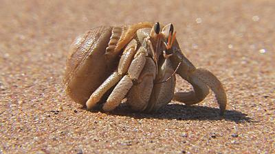 5813d1200076702-should-i-buy-xh-a1-macro-studio-shooting-hermit-crab-1.jpg