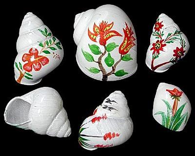 flower_shells_hermit_crabs.jpg