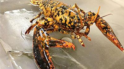 lobster_mystic_aquarium.jpg