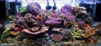 علاقه مندان آکواریوم های آبشور می توانند اطلاعات و تصاویر خود را در این گروه به اشتراک گذاشته و همچنین بهترین ماهی یا ریف از نظر خود را هم بیان کنند